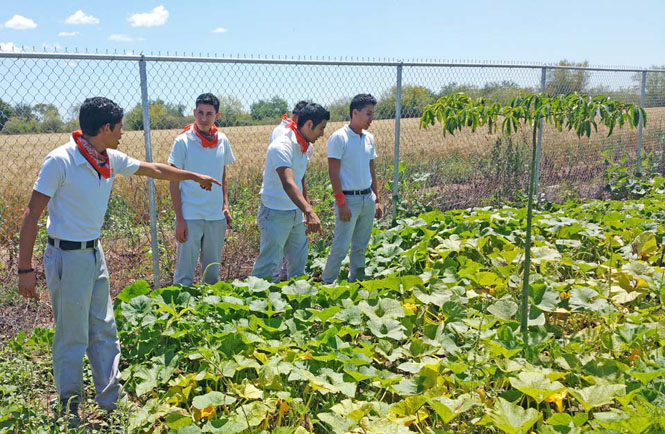 Students with their squash crop