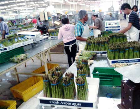 Asparagus packing plant